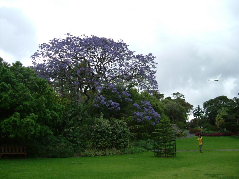 2004-11-08 Sydney, Australia. Part of the extensive Botanical Gardens.