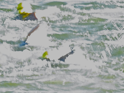 [My few pix of the start of the swim didn't turn out. .. I salvaged this telephoto image.]