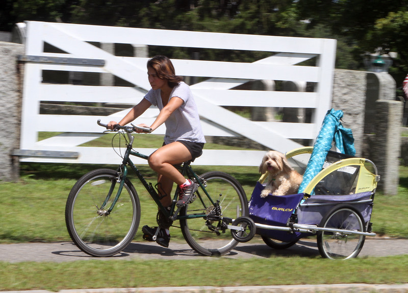 Mirna Cunha of Chelmsford pedals along Acton Road on the way to Heart Pond in Chelmsford, towing her shih-tzu mix, Benny. It was hard work because one of the cart's tires had gone flat. (SUN/Julia Malakie)