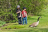 Another goose makes it past the boys without incident.<br /> <br /> Part of a sequence of shots of kids braving an approach to some of the Canada geese who are year-round residents.  The boys scared themselves more than the geese scared them I'd say.<br /> <br /> Gallup Park, Ann Arbor<br /> April 19, 2012<br /> (nex5n)