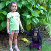 The Toodler & the Chimpanze