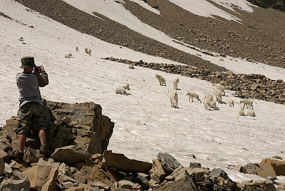Youth photographing Utah's mountain goats on a snow field.