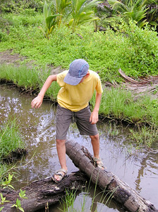 boy balancing on tree trunks - tobago, west indies