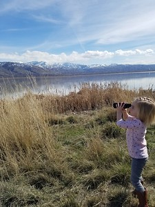 Watching swans through a scope on Wild Swan Day at  Farmington Bay