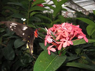 More info here: .. http://www.butterflies.org/