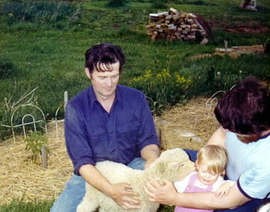 Avery Wilcox Sr., who raised sheep as well as Christmas trees, introduces an affectionate lamb to his granddaughter Melissa with the help of his son and Melissa's father, Greg, in 1977. (Photo courtesy of the family.)