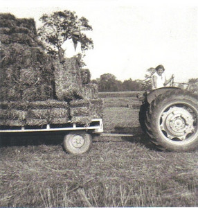 Marie Stang performed whatever tasks she was asked to do on the Stang dairy farm. She often drove the tractor. Her first husband, Frank Stang, is shown on the wagon behind, loading or unloading a bale of hay.