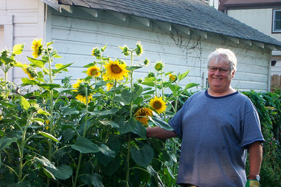 """Tom Kuns, known for having a """"green thumb,"""" shows off his sunflowers."""
