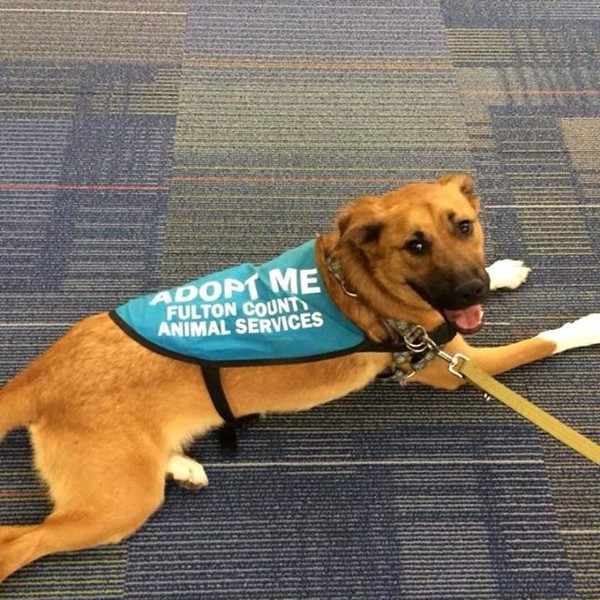 Socks (now Moxie) pals around GPB headquarters during her outing for the dog for the day program.
