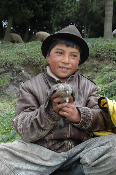 Little Boy Shepherd<br /> South of Quito<br /> Ecuador
