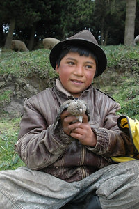 Little Boy Shepherd South of Quito Ecuador