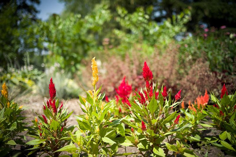 floral, red, fg/bg