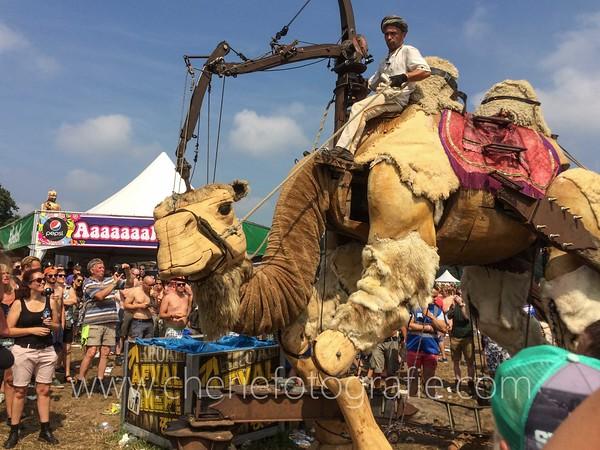 Camel-0564