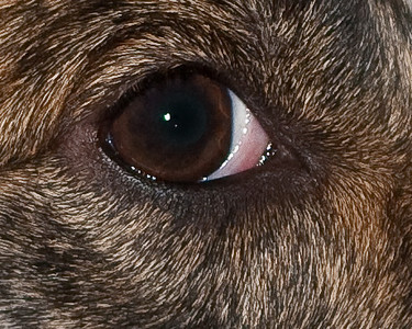 Eyes-6711