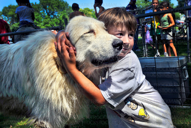 Toby, a seven-year-old Great Pyrenees, gets special attention from Dylan Bartness, also seven, in the petting zoo at the Corn Days summer festival at the Church of St. George in Long Lake, Minn. Saturday, Aug. 14, 2010.