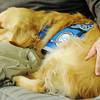 Globe/T. Rob Brown<br /> Faces of Recovery: Jason Glaskey gets snuggled by Louie, a comfort dog, from Immanuel Lutheran Church through Lutheran Church Charities.