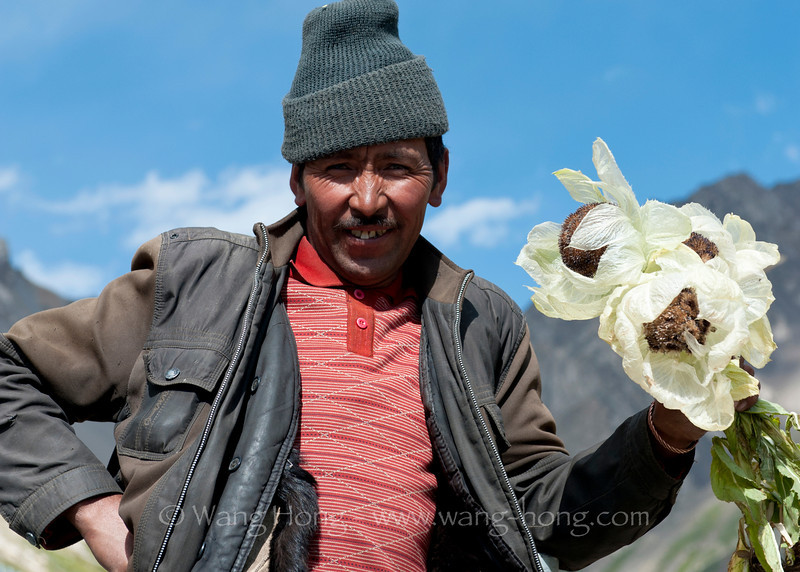Mongolian man holding snow lotus in the Heavenly Mountains, in Xinjiang, summer 2012.