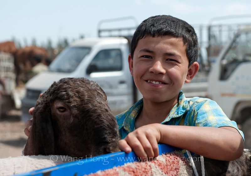Boy with his sheep on back of a small truck at the Kashgar Livestock Market, in Xinjiang, summer 2012.