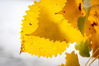 Ohio_Fall_020