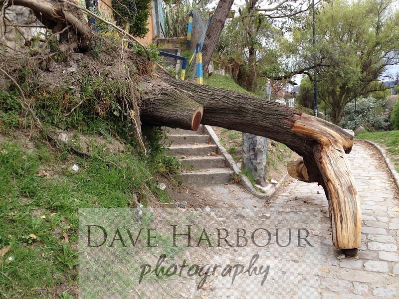 Cuenca, fallen tree, ad hoc sculpture, 9-2014