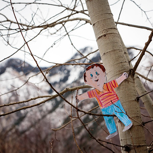Climbing a Quaking Aspen (state tree)