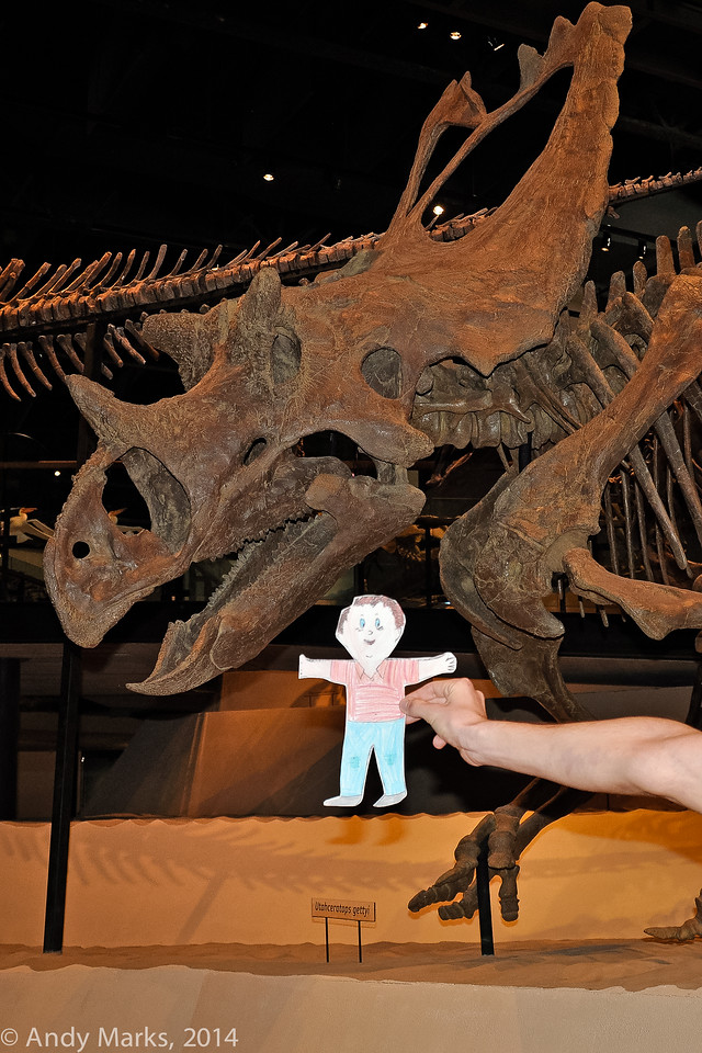 Triceratops with Stanley at the UNHM