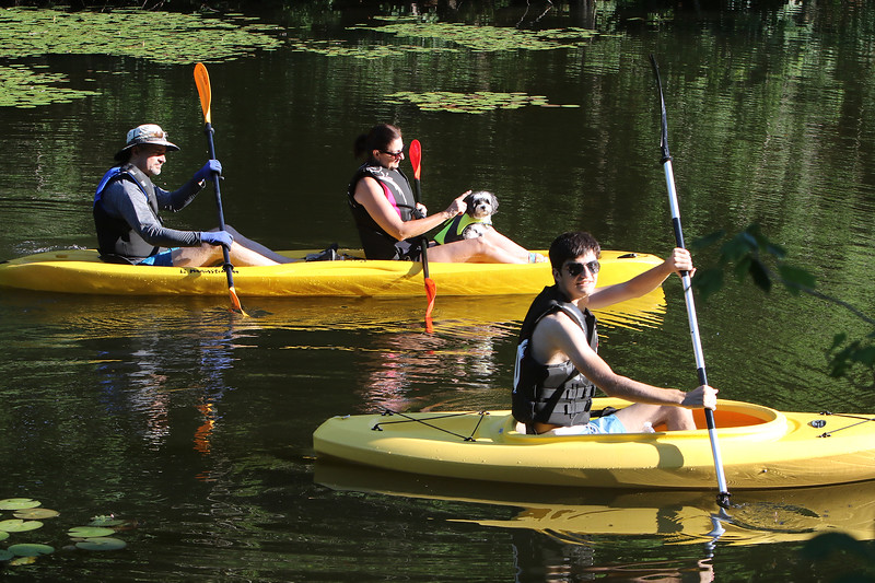 Features at Westford town beach at Forge Pond. Rafal  and Elizabeth Kozlowski of Westford and their son Alex, 19, kayak on an inlet of Forge Pond with their Havanese dog, Brady, riding along.(SUN/Julia Malakie)