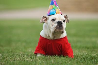 "Gardner-Webb Bulldog Mascot Roebuck ""Bucky"" plays in the quad."