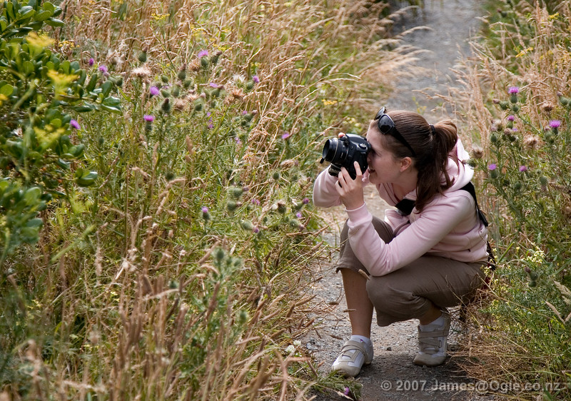Sarah At Tarakina Bay in Wellington. Taking a photo of a thistle or a bee or something.