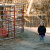 "Poet MacKinnon, 2, walks along the road on the family farm on Thursday.<br /> Mike MacKinnon does the evening chores with his children on Frog Belly Farms in Boulder County. For more photos of the farm, go to  <a href=""http://www.dailycamera.com"">http://www.dailycamera.com</a><br /> Cliff Grassmick / December 16, 2010"