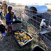 "Maitreya Rose,9, right, Poet MacKinnon, 2, and Mike MacKinnon, feed the pigs on Thursday.<br /> Mike MacKinnon does the evening chores with his children on Frog Belly Farms in Boulder County. For more photos of the farm, go to  <a href=""http://www.dailycamera.com"">http://www.dailycamera.com</a><br /> Cliff Grassmick / December 16, 2010"