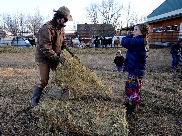 "Mike MacKinnon, left, gathers hay with his stepdaughter, Maitreya Rose, 9, for the goats. Poet MacKinnon, 2, follows up to help.<br /> Mike MacKinnon does the evening chores with his children on Frog Belly Farms in Boulder County. For more photos of the farm, go to  <a href=""http://www.dailycamera.com"">http://www.dailycamera.com</a><br /> Cliff Grassmick / December 16, 2010"