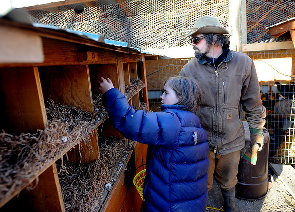 """Maitreya Rose, 9, and her stepfather, Mike MacKinnon, collect eggs.<br /> Mike MacKinnon does the evening chores with his children on Frog Belly Farms in Boulder County. For more photos of the farm, go to  <a href=""""http://www.dailycamera.com"""">http://www.dailycamera.com</a><br /> Cliff Grassmick / December 16, 2010"""