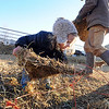 "Mike MacKinnon gathers hay for the goats, as his daughter, Poet, 2, tries to help.<br /> Mike MacKinnon does the evening chores with his children on Frog Belly Farms in Boulder County. For more photos of the farm, go to  <a href=""http://www.dailycamera.com"">http://www.dailycamera.com</a><br /> Cliff Grassmick / December 16, 2010"