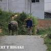 guantian shan village-9