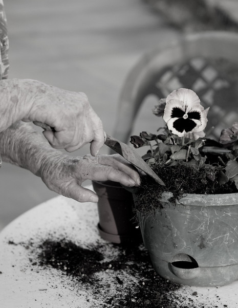 Hands working in the flowers