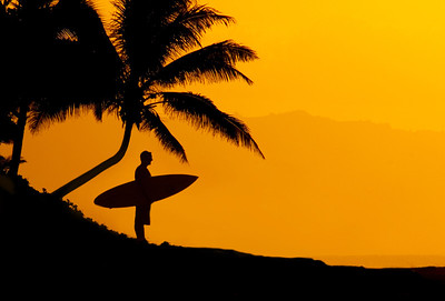 Surfer under palm, North Shore (short hair)