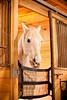 Hobby Horse -31