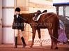 Hobby Horse -46
