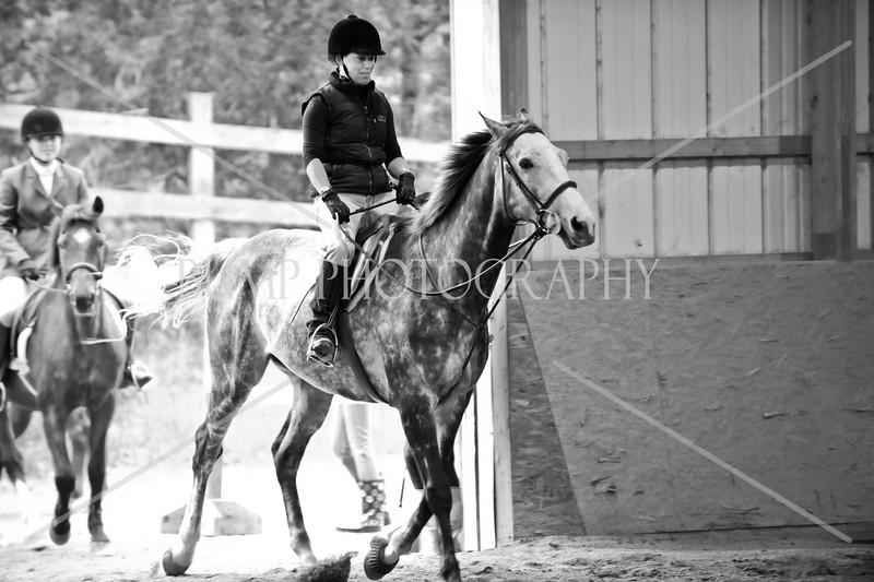 Hobby Horse -26