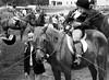 Hobby Horse Farm -69