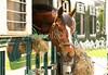 Hobby Horse Farm -71