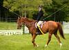 Hobby Horse Farm 20100523-60