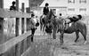 Hobby Horse Farm 20100523-45