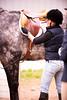 Hobby Horse -2