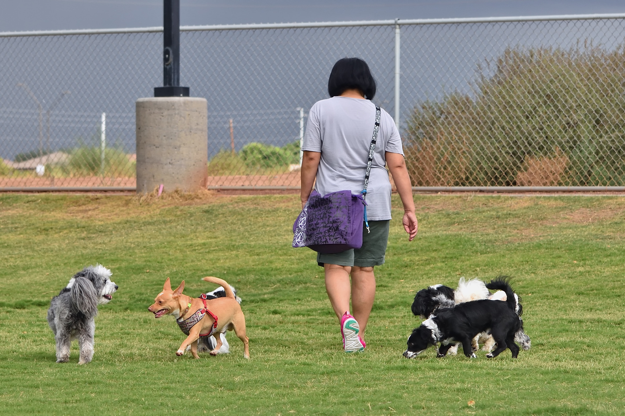 Amy with them doggys at the park