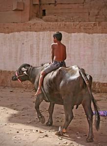 Young boy riding a cow - India