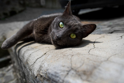 GREEN-EYED ITALIAN BLACK CAT