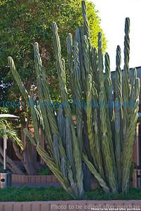 01 01 2009 Sight seeing in Arizona (4)