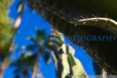 01 01 2009 Sight seeing in Arizona (32)